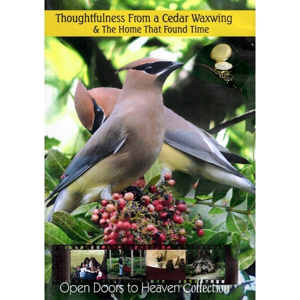thoughtfulness from a cedar waxwing