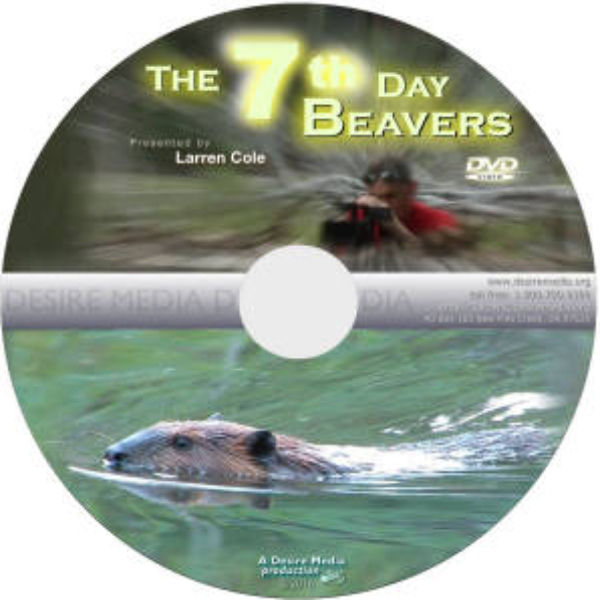 The 7th Day Beavers - DVD