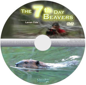 7th Day Beavers DVD