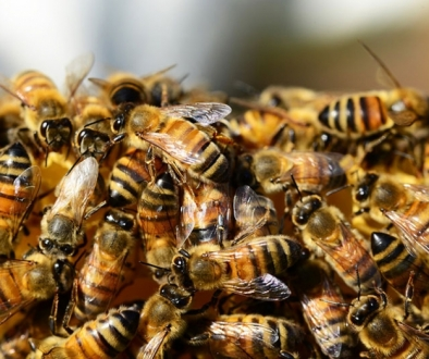 Massive Insect Decline